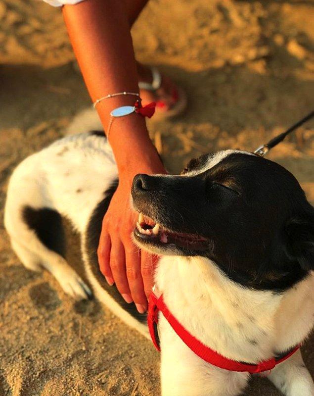 Şıklığı, zarifliği ve güzelliği yanında, hayvan dostlarımızı da düşünmeleriyle gönlümüzü fethediyorlar.