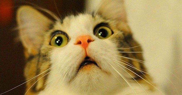 Kedim bazen boşluğa dikkatli bir şekilde bakıyor? Hayaletleri mi görüyor?