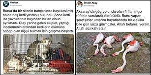 Aklımız Havsalamız Almıyor! Türkiye'de Son Dönemde Artan ve Önlem Alınmazsa Daha Çok Canımızı Yakacak Hayvan Katliamları
