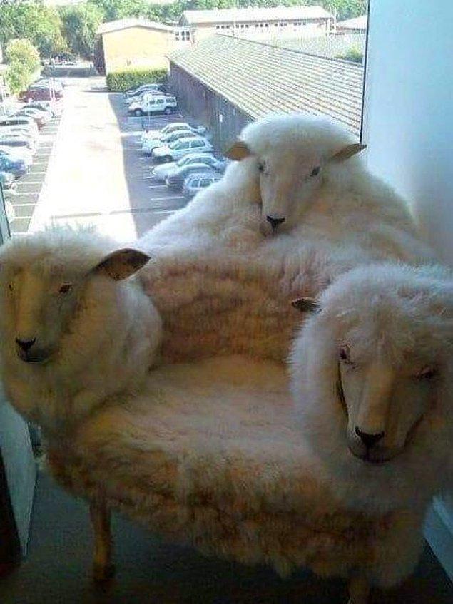 7. Game of Sheep?