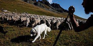 Her Şey Eğitim İçin! Sınıf Kapanmasın Diye Koyunları Öğrenci Olarak Kaydettiler