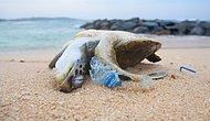 ''Denizden Babam Bile Çıksa Yerim'' Diyenler! Hiç Farkında Olmadan Plastik de Yediğinizi Biliyor muydunuz?