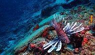 Büyük Keşif UNESCO'da Tanıtıldı: Dünyanın En Eski Gemi Batığı 'Batı Antalya' 3 Bin 600 Yaşında