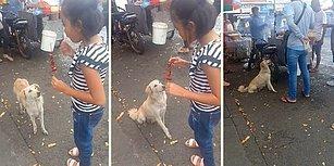 Yiyecek Standının Önünde Bekleyerek Müşterilerden Yiyecek İsteyen Akıllı Köpek