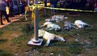 Türkiye'de Bir İlk: Ankara Büyükşehir Belediyesi Katledilen 16 Köpeğin Davasına Müşteki Sıfatıyla Katılacak