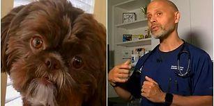Sapasağlam Olmasına Rağmen Hayatını Kaybeden Sahibi ile Gömülsün Diye Ötenazi Yapılan Köpek