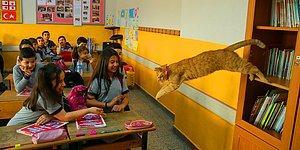 Öğrencilerden Hüzünlü Veda: Türkiye'nin Gündemindeki Kedi Tombi Yurt Dışına Gidiyor