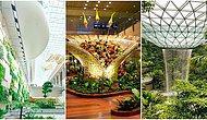 İçinde Orman ve Şelale Var: Yedinci Kez Dünyanın En İyi Havaalanı Ödülünü Alan Singapur Changi Havalimanı