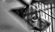 Sakarya'da Bir Barınakta Hayatını Kaybeden Köpeğin Dehşet Verici Otopsi Raporu: 'Ölüm Nedeni Şiddetli Tecavüz'
