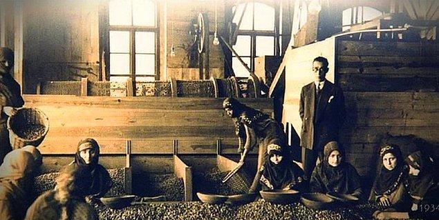 21. Fındık işleme fabrikası, Giresun, 1934.