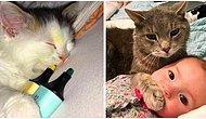 Minnoşlukları ve Psikopatlıklarıyla Başımızın Tatlı Belası Olmuş ve İyice Bizlere Benzemeye Başlamış 21 Kedi