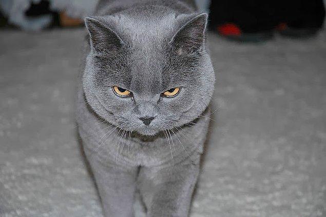 10. Adeta radar haline gelmişsinizdir, kedileri metrelerce öteden görürsünüz.