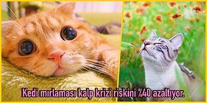 Kedi Girmeyen Eve Doktor Girer: Kedi Mırlamasının Bazı İlaçlardan Bile Daha Etkili Olduğunu Biliyor musunuz?