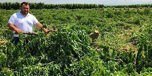 Artan Maliyetlere İsyan Etti: Bursa'da 3.800 Meyve Ağacını Kesen Çiftçi