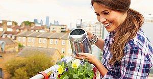 Yaz Geldi Çiçekler Açtı! Yaz Boyunca Enfes Bitkilere Sahip Olmak İstiyorsanız Buraya Göz Atmalısınız!