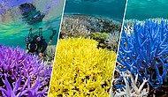 Dünyayı Nasıl Mahvettik? Ölü Mercanların Neon Renkleriyle, Okyanusun Karanlık Dünyası Aydınlanıyor!