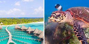 Maldivler'de Lüks Tatil Köyünde Konaklayarak Deniz Kaplumbağalarına Bakacak Hayvansever Aranıyor