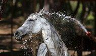 Özgür Atlar Zamanı: Antalya'da Faytondan Kurtulan 40 At Özel Bakıma Alındı