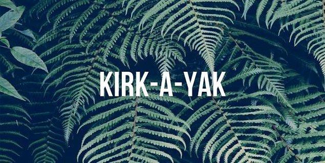 """6. """"Kırkayak"""" kelimesi doğru bir şekilde hecelerine ayrılmış mıdır?"""