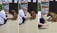 Kanayan Patisinin Tedavisi İçin Eczaneye Gelen Köpek ve Ona Yardım Eden Güzel İnsan!