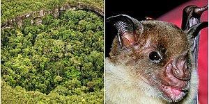 Hâlâ Hayattalar! İnsan Eli Değmemiş Kayıp Şehir'de Nesli Tükenmiş Hayvanlardan Oluşan Bir Ekosistem Keşfedildi