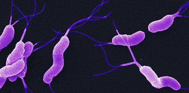 14. Mide kanseri ve H.Pylori enfeksiyonu