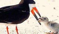 Yavrusuna Yiyecek Sandığı İzmariti Getiren Anne Kuşun Görenlerin İçini Parçalayan Fotoğrafı