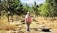 Adeta Cennet Oldu: Amasya'da Moloz ve Çöplerin Atıldığı Bir Alan 22 Yılda Ormana Döndü