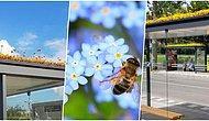İklim Değişikliğine Dikkat Çekmek Adına Arılar İçin Yüzlerce Otobüs Durağını Çiçeklerle Donatan Hollanda