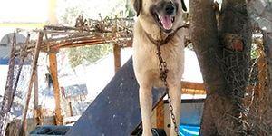 Havlamasına Sinirlenmiş... Duman İsimli Köpek Tüfekle Vurularak Katledildi