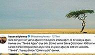Çöllerin Çölü: Dünyanın En Yalnız Ağacı Olarak Bilinen Ténéré Ağacı'nın Hikayesi Size İnsanlığı Sorgulatacak
