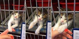Tedavi Gören Dünya Tatlısı Kedinin Kafesin İçinden Kendini Sevdirmek İstediği Anlar