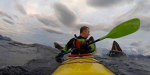 Kano Yapan Adamın Metrelerce Yanına Yaklaşarak Merhaba Demeye Çalışan Balinalar