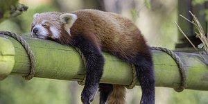 Uyku Hakkında Kulaktan Kulağa Dolaşan Efsanelerin Ne Kadarı Gerçek?