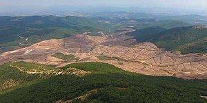 Çanakkale'de Altın Madeni İçin 195 Bin Ağaç Kesildi: 'Müthiş Bir Katliam'