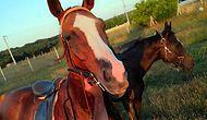 Sadece Kafa Kısmı Kalmış: Çiftlikten Çalınan İngiliz Yarış Atı Ormanlık Alanda Kesilmiş Olarak Bulundu