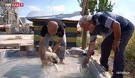 Kendi İmkanlarıyla Yaptığı Havuz ile Sıcaktan Bunalan Hayvanları Serinleten Güzel Kalpli İnsan!
