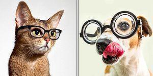 Kediler mi Daha Zeki Yoksa Köpekler mi? Yıllardır Fikir Birliğine Varılamayan Konuyu Açıklığa Kavuşturuyoruz!