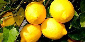 Bu Görsellerden Hangisinin Limon Olduğunu Sadece Semt Pazarı Müdavimleri Biliyor!