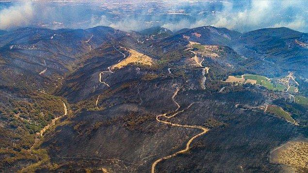 1. Türkiye'de bu yıl kaç hektarlık bir orman alanı yandı?