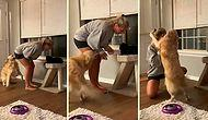 İnsan Dostu Kediyi Sevince Çılgına Dönen Köpek