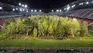 İklim Değişikliğine Dikkat Çekmek İçin 30 Bin Seyirci Kapasiteli Stadyuma 300 Ağaç Diken Sanatçı
