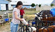 'Sonunda Hayalimi Gerçekleştirdim': Muhasebecilik Yapmaktan Sıkılan Avustralyalı Kadın, Ağrı'ya Gelip Çiftlikte Çalışmaya Başladı