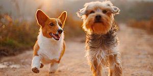 Belçika'da Tartışma Yaratan Karar: Doktor, Hasta Köpeği İçin Bir Çalışana 14 Gün Rapor Verdi