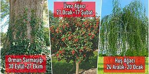 Kelt Mitolojisine Göre Ağaç Burcunuzu ve Burcunuza Ait Tüm Özellikleri Öğrenmek İster misiniz?