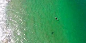 Drone'un İkazı Sayesinde Yanına Yaklaşan Köpek Balığını Fark Eden Sörfçü
