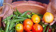 Yiyeceklerinizi Taze Tutmanın Tek Yolu Buzdolabı Değil! Tamamen Doğal Ürünlerle Elektriksiz Soğutucu Yapabilirsiniz