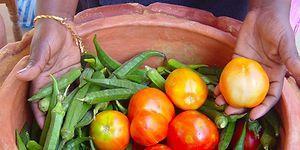 Yiyeceklerinizi Taze Tutmanın Tek Yolu Buzdolabı Değil! Tamamen Doğal Ürünlerle Elektiriksiz Soğutucu Yapabilirsiniz