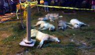Ankara'da 16 Köpeği Zehirleyerek Katletmişlerdi: Sanıklar Hâkim Karşısına Çıktı