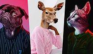 Fotoğraf Sanatçısı Murat Arık'ın Eğlenceli Hayvan Portresi Çalışmalarını Mutlaka Görmelisiniz!